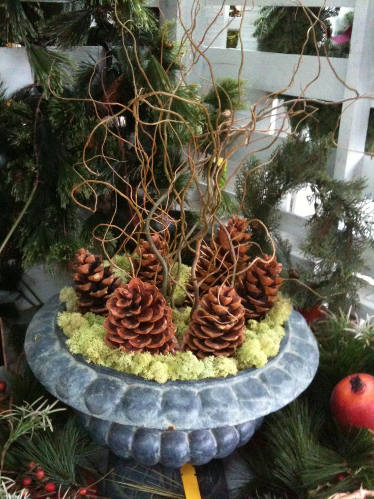 moss, pine cones and curly willow. When my curly willow grows a little more, I'll be able to harvest branches.