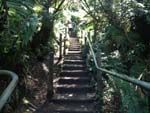 1000 steps in the Dandenongs, East of Melbourne. A good workout.
