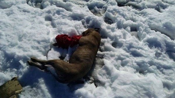 PLEASE SIGN and SHARE......Justice for Nebraska dog frozen to the ground! | YouSignAnimals.org