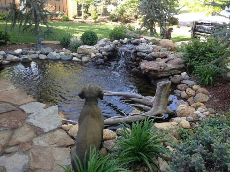 Dogs pond!!!!