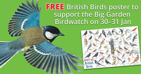 Five reasons we should take part in the RSPB's Big Garden Birdwatch plus a free British Birds identification poster!