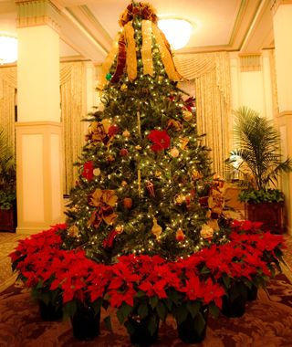 Francis Marion Hotel, in Charleston, SC, one of the best U.S. hotels for the holidays.
