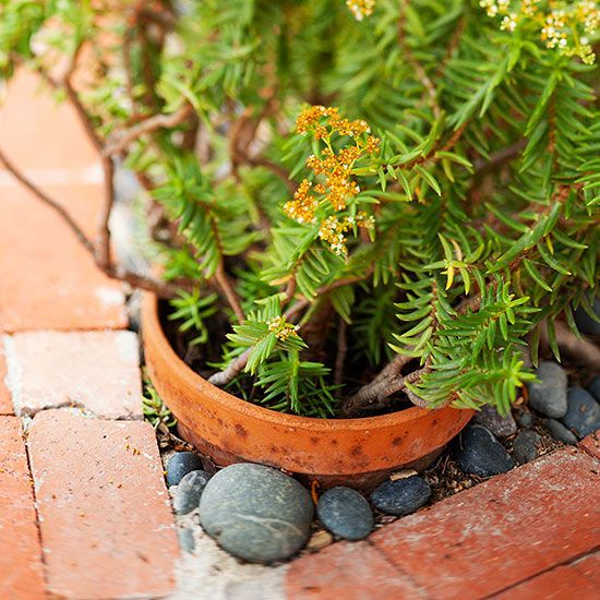 Reduce, Reuse, Recycle Rather than discarding that assortment of terra-cotta pots, consider employing them as in-ground planters. Tuck the planters in amongst ground-dwelling plants to add dimension to your garden. (helps contain invasive plants!)