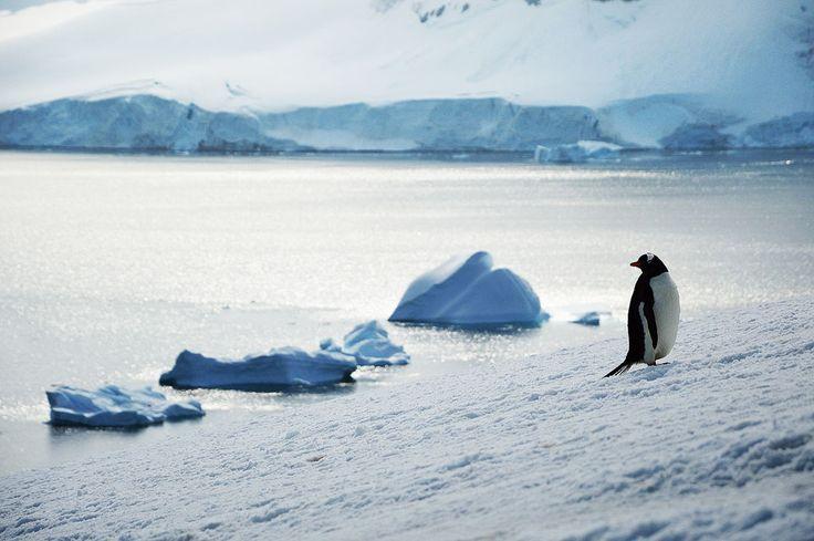 A la découverte du cercle polaire |MilK decoration