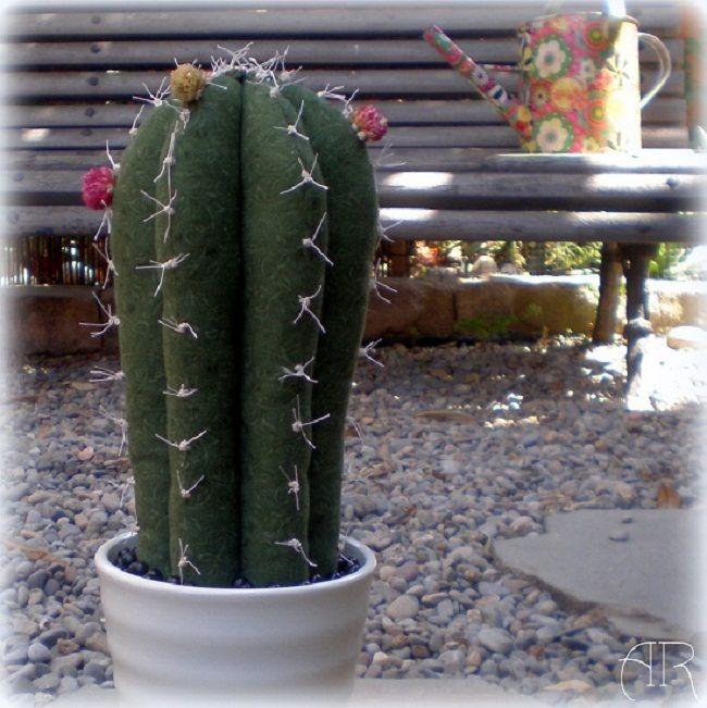 Cactus patchwork.