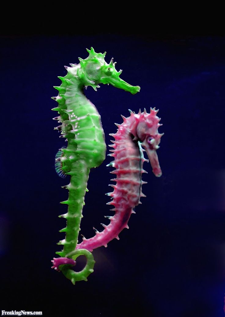 sea horses | Funny Green and Pink Seahorses