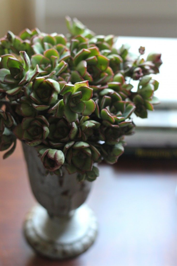 Turn overgrown succulents into this easy, no-maintenance bouquet.