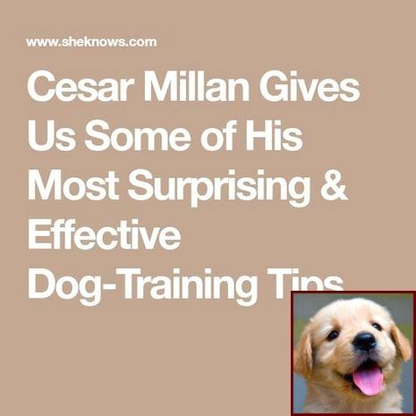 House Training Your Puppy In 7 Days And Dog Training Classes