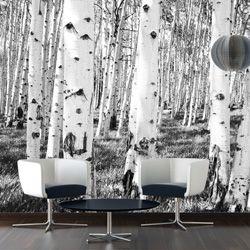 the 25+ best fototapete birkenwald ideas on pinterest | birkenwald ... - Fototapete 250x250