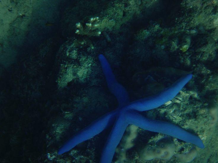 Blue Star Fish Thailand