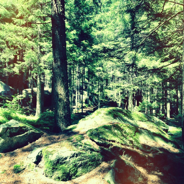 Il bosco