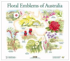 Floral Emblems of Australia Poster and Education Pack (free)