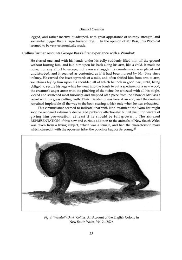 'wombat'
