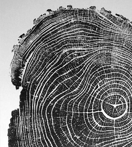 Black Locust Wood Print - really like this composition, simple but at the same time complicated - you can see so much detail in the rings of the tree and it has so much texture