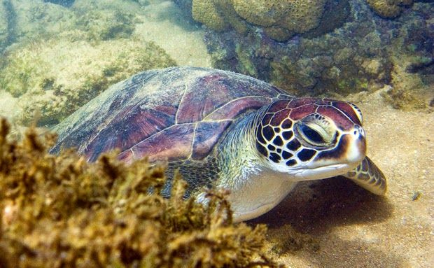 BioOrbis: Poluição causa tumores em tartarugas marinhas no H...