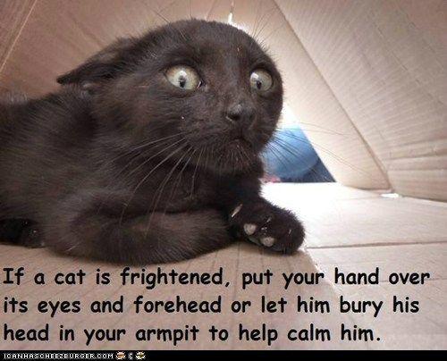Fun Cat Facts #40