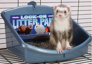 Image result for Marshall Ferret Litter Pan