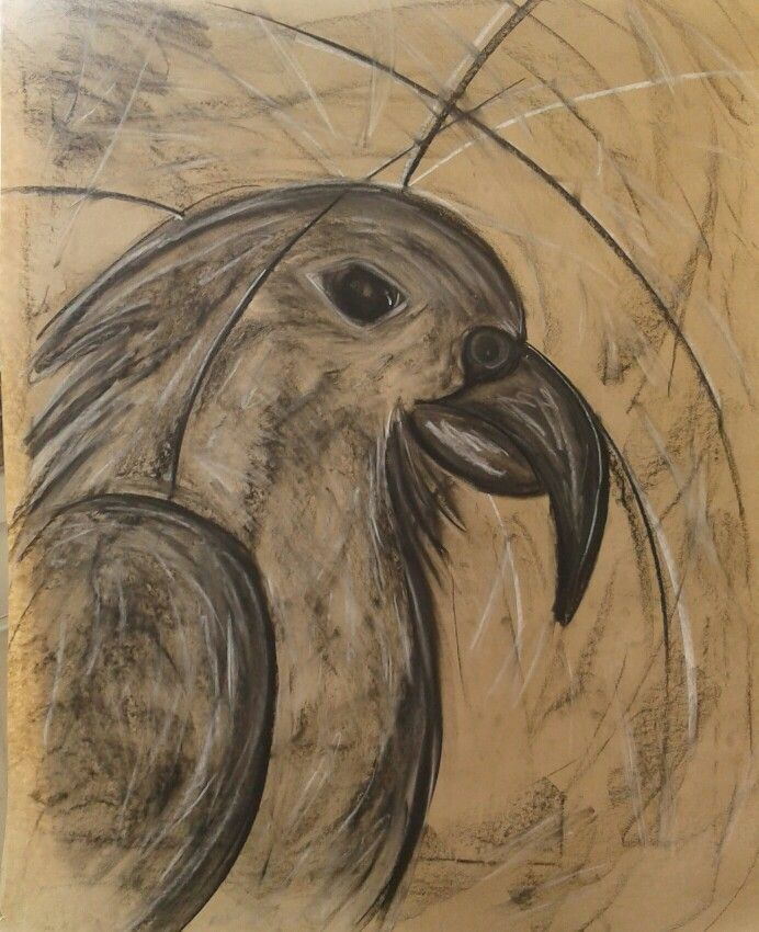 Kea- Charcoal drawing