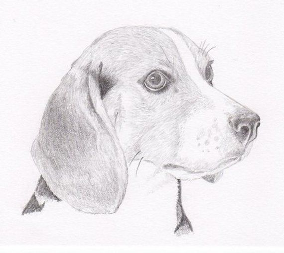 Beagle Signed Personalized Original Pencil Drawing Double Matted