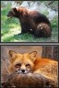 Samtalsbilder Europas djur