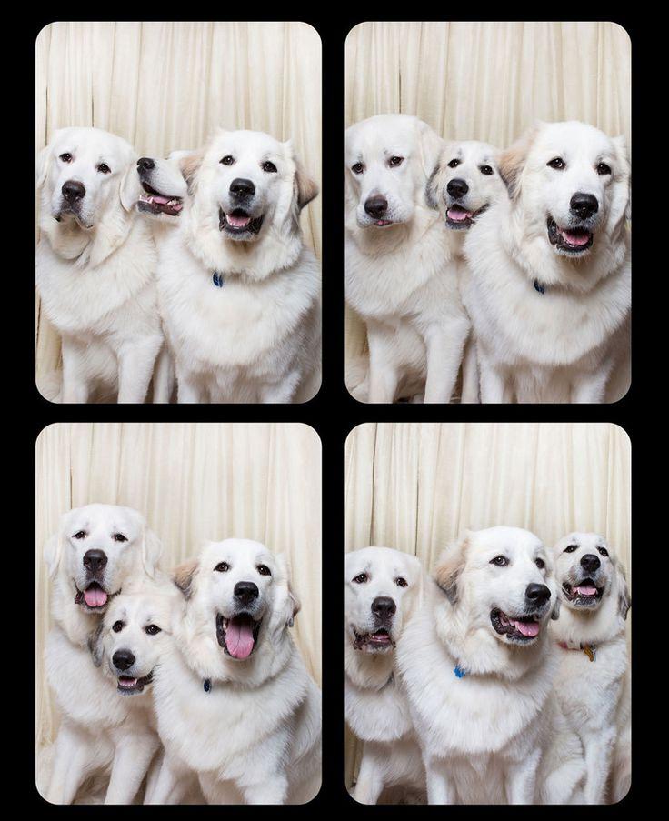 Koirien kaverikuvat ovat parasta hetkeen