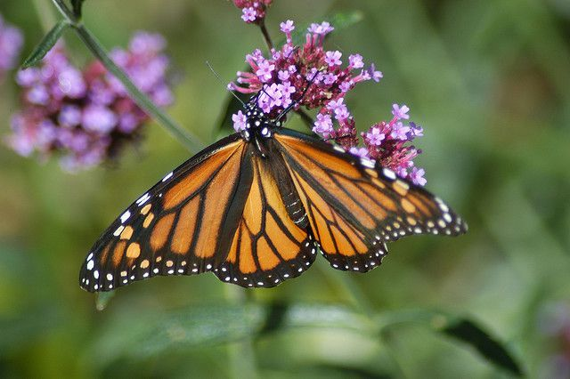 95c4fc33ce97b5cca3cfadb32b0414c1 - St Louis Botanical Gardens Butterfly House