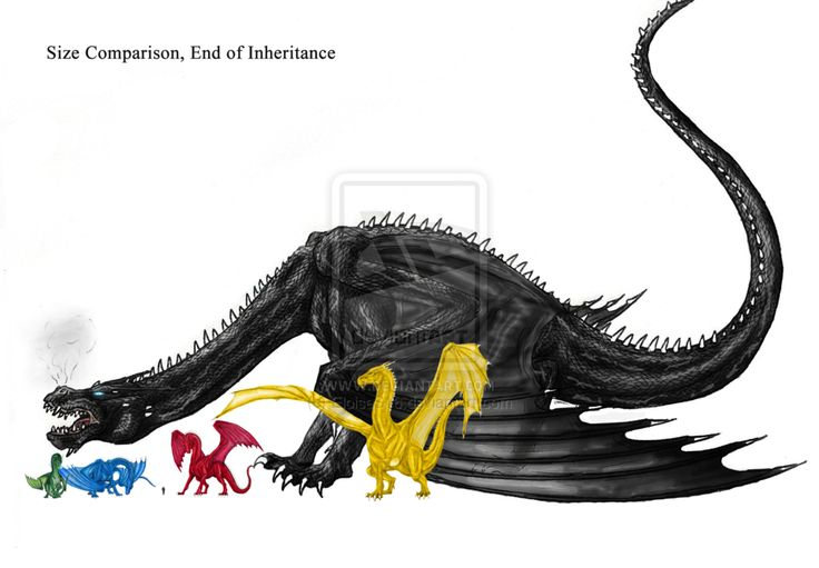 Size comparison from the end of Inheritance. HOLY VALHALLA SHRUIKAN IS GINORMOUS, look down between Saphira and Thorn, I think that's a HUMAN!!!