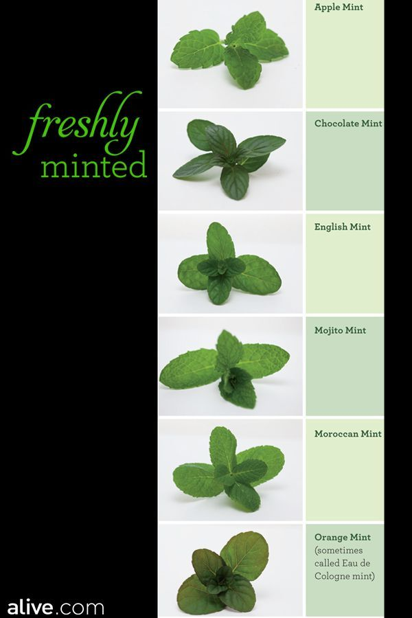 17 of 2017 39 s best growing mint ideas on pinterest mint - A gardener is planting two types of trees ...