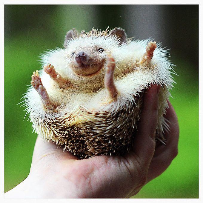 hedgehogfriends
