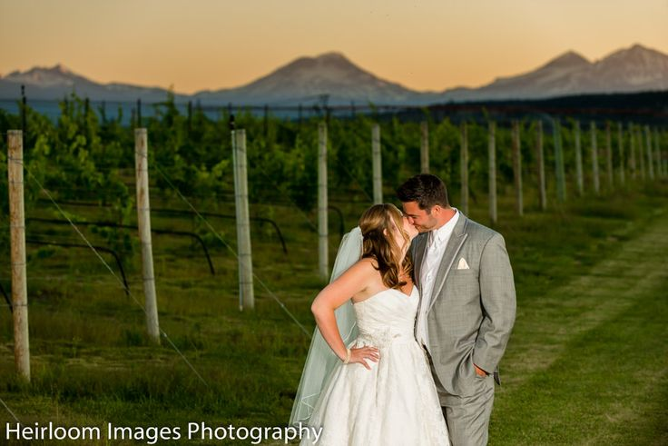 sunset kiss in the vineyards