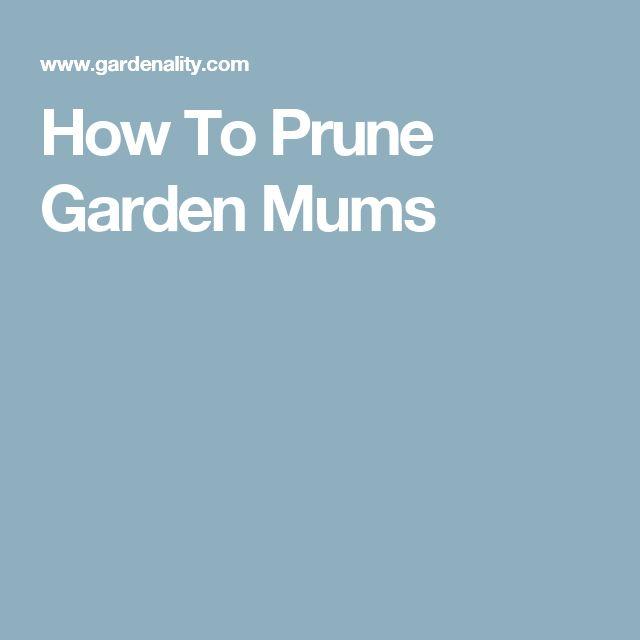 How To Prune Garden Mums
