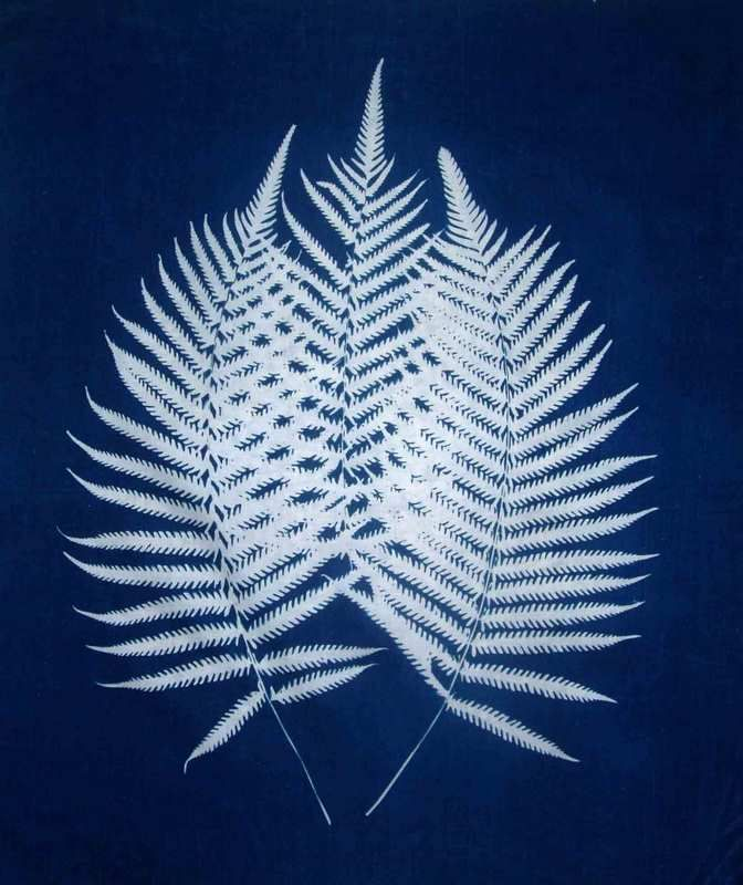 Beautiful tone and elegant photogram which recalls Anna Atkins.