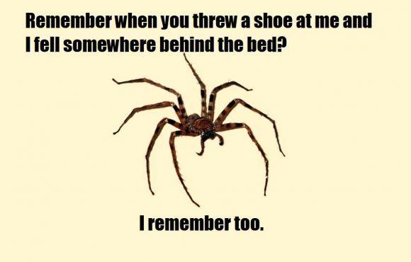 spider memes   Spider Meme - Sharenator.com