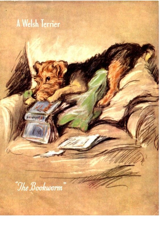 Welsh Terrier Dog The Bookworm Card Notecards Tearing Up a Book Mischief
