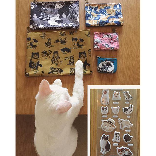 11月号 #リンネル ♩ またまた、ニャンコ付録だって〜₍˄·͈༝·͈˄₎◞︎❤︎ #リンネル付録 最近の付録ってすごいなぁ〜。 #八おこめ #ねこ部 #cat #ねこ ( ※ちなみに、ハッチャンおこちゃんは出ていませんよ〜。宣伝担当です)