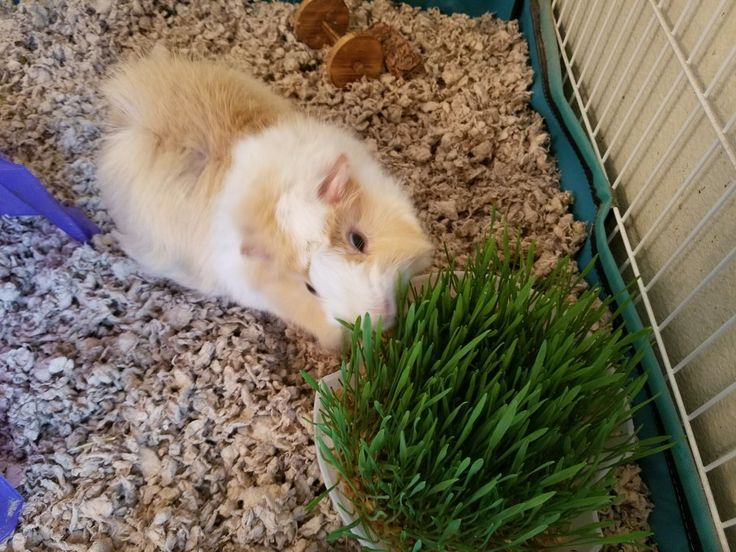 Learn all about pet grass & how to grow it at home
