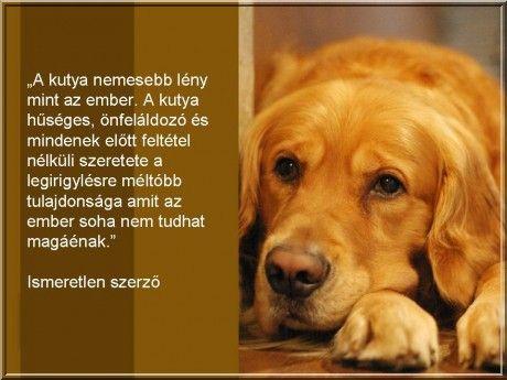 a-kutya-nemesebb-leny....