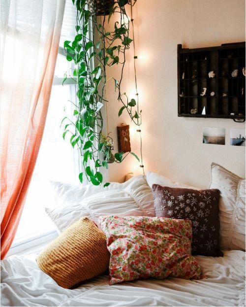 M s de 25 ideas incre bles sobre plantas enredaderas en - Enredaderas de interior ...