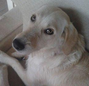 Come si calcola l'età dei cani? Scopri perchè non è corretto semplicemente moltiplicare l'età del cane x 7