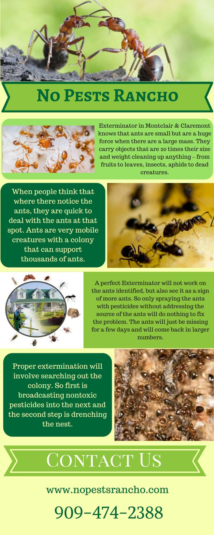 Are you in trouble because of ants in Montclair & Fontana? Then, No pests Rancho will provide you a reliable service such as ant exterminator, rat exterminator, termite pest control, spider pest control & many more at an affordable cost. They have a unique exterminator to provide you a complete solution. For more details you can contact - http://nopestsrancho.com/