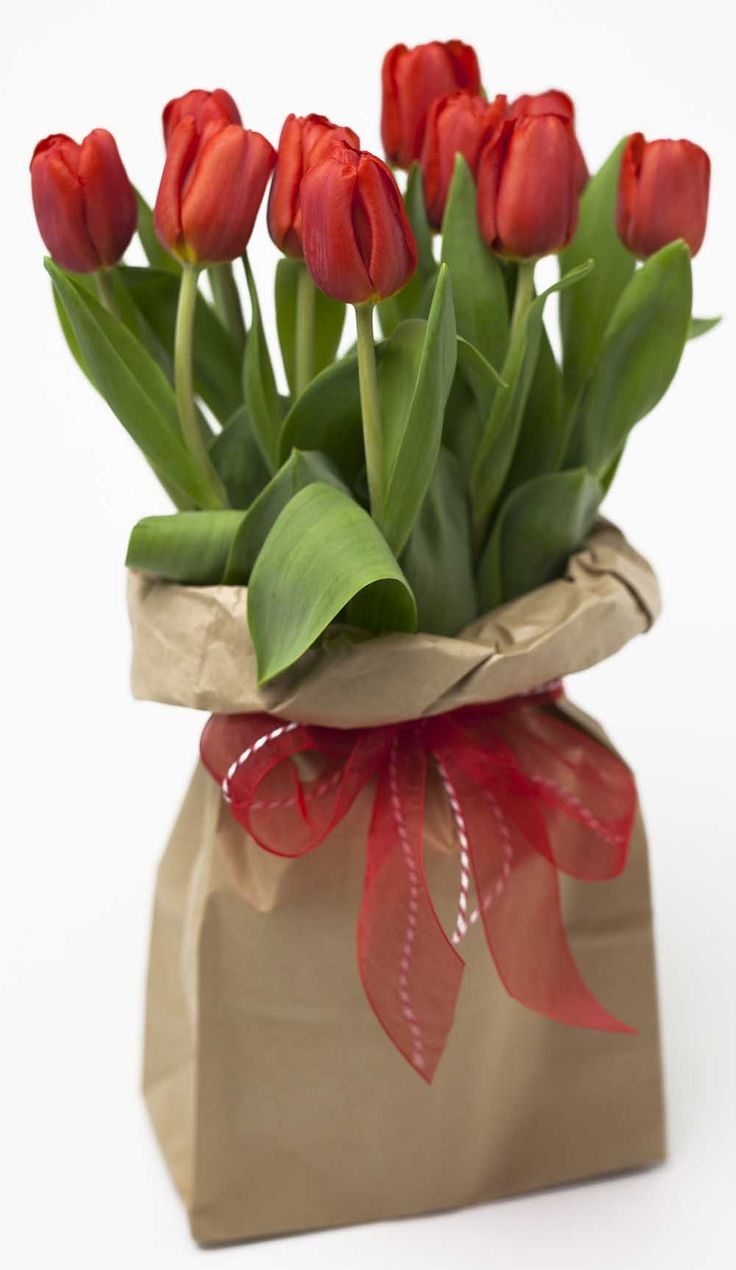 Funky Bagged Red Tulips http://www.expressionsfloral.co.nz/buy-flowers/mothers-day/Funky-Bagged-Tulips-florist-hamilton #Mothersday #tulips #red