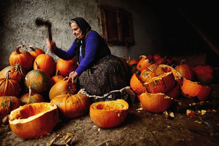 Romanian grandmother copping pumpkins - rural Maramures, Romania, 2009