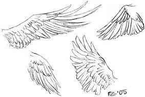 учимся рисовать крылья — Yandex.Images – Теперь вы знаете как нарисовать крыло, надеюсь было интересно и познаватель...