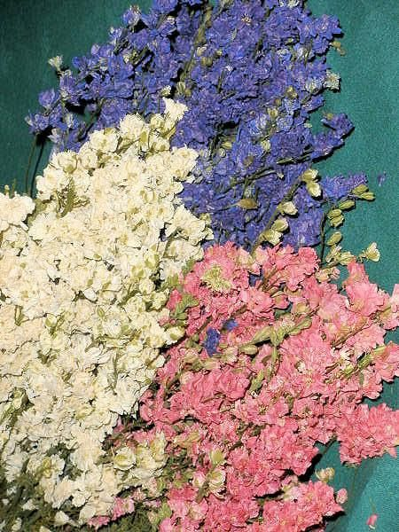 Dried Larkspur Flowers , such pretty colors. Great for flowers around the house.
