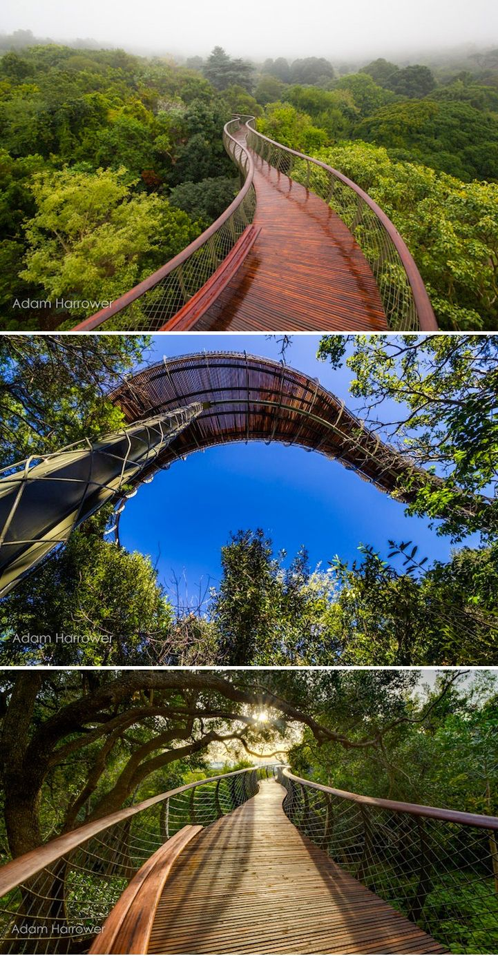This surreal walkway recently installed in Cape Town, South Africa, creates a meandering, aerial path that allows visitors to stroll through the treetops. #travel