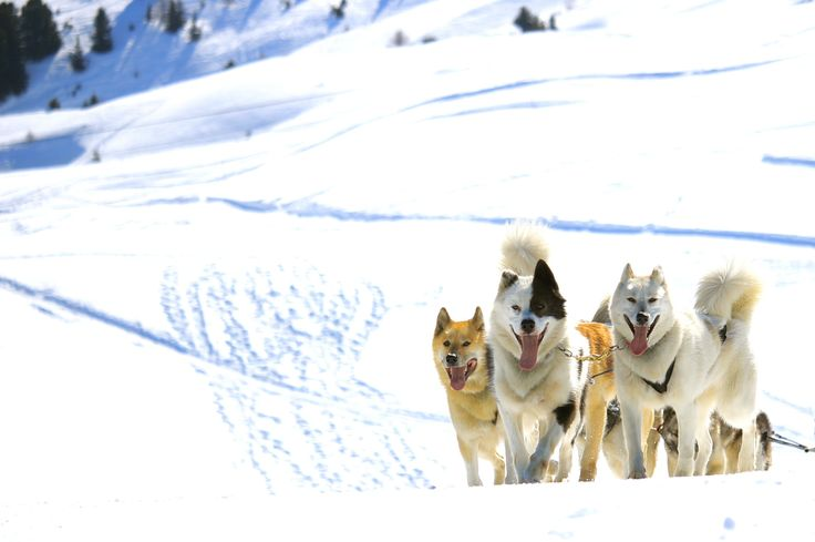 Dog sledding by clementboudou on 500px