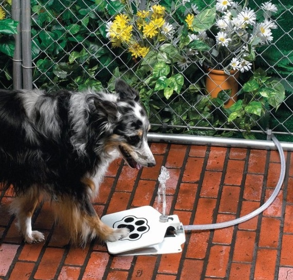 Dog water fountain that the dog can activate.  #puppied