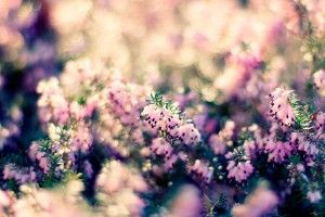 Beautiful Flowers Nature HD Wallpaper