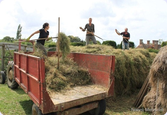 Working on the compost hip at @Great Dixter  Garden, August 2012 - It was a great fun!