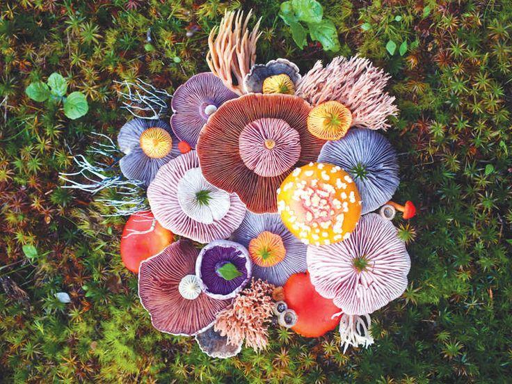 Wild Mushrooms by Jill Bliss